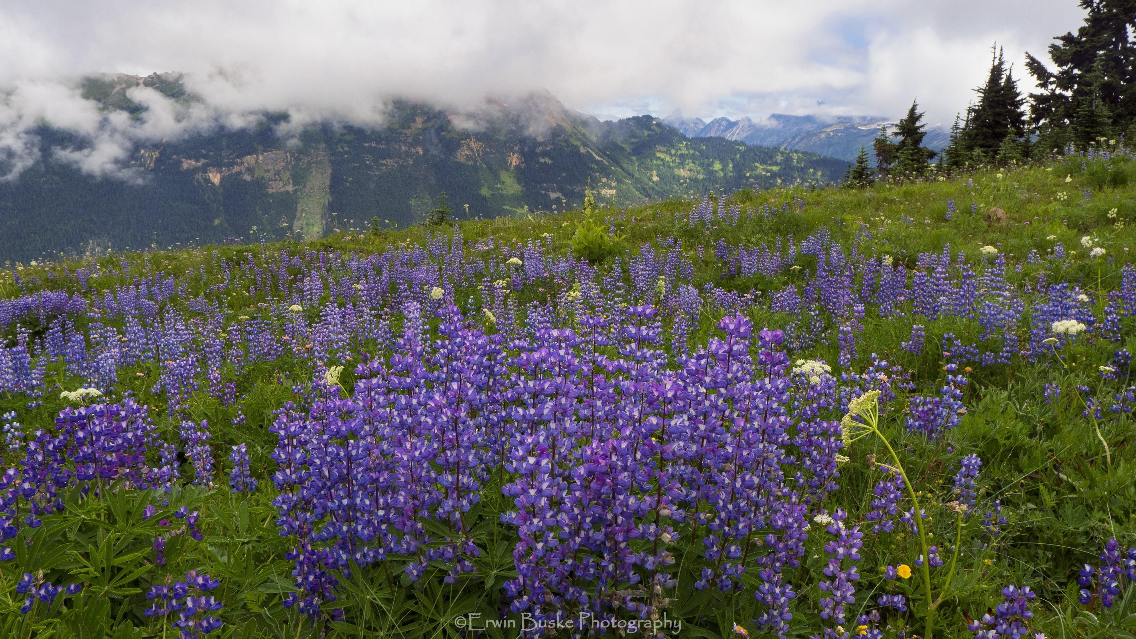 Glacier Peak 0430