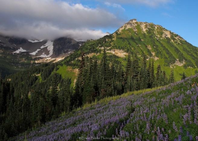 Glacier Peak 0539R1
