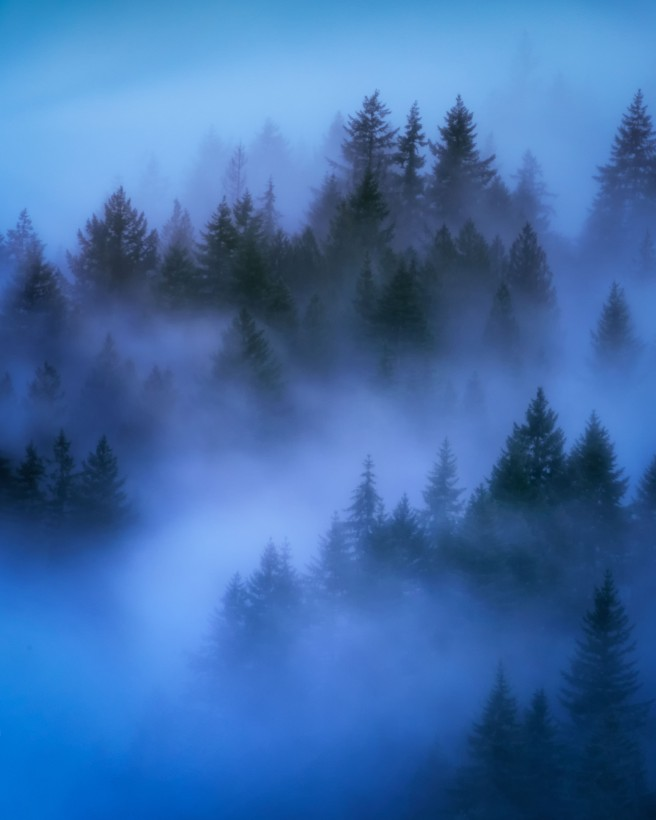 Secrets of the Forest Journey 2 013 LuminarR1