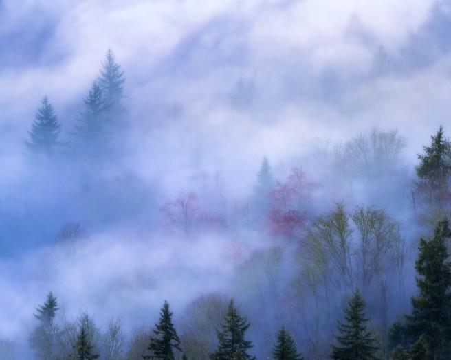 Secrets of the Forest Journey 2 302Luminarr1